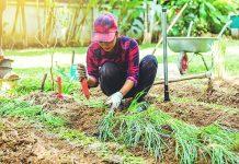 Ureditev zelenjavnega vrta